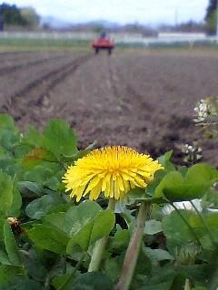 兼業農家ブログ