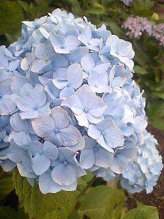 ケータイ写真館〜2007/06/24
